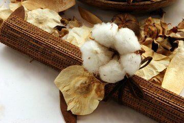 10 fontos dolog, amit az organikus gyapotról és textilekről tudnod kell